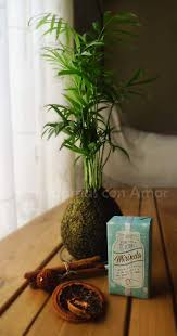 249 best Kokedama images on Pinterest | Gardening, Plants and ...