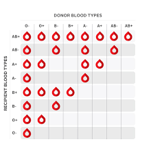 parent blood types chart whats my blood type canadian blood services