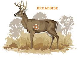 Where To Shoot A Deer Grand View Outdoors