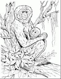 Small Picture Amazing printable monkey coloring pages with monkey coloring page