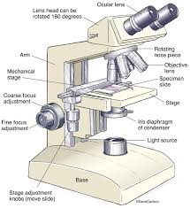 Using A Good Compound Light Microscope Compound Light Microscope Drawing At Getdrawings Com Free
