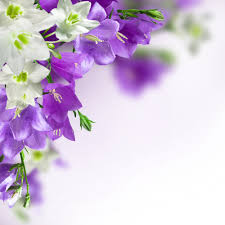 Purple Flowers Backgrounds Spring Background With White And Purple Flowers Gallery