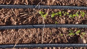 drip irrigation systems instead of sprinklers for water conservation