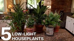 Low Light Indoor 5 Low Light Indoor Plants For Your Home Or Office