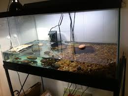 Turtle Tank Decor Similiar 40 Gallon Tetrafauna Keywords
