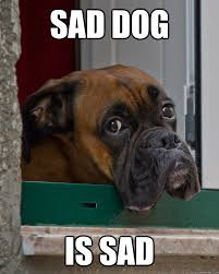 sad dog is sad - Misc - quickmeme via Relatably.com