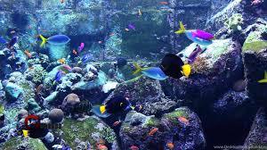 Hd Fish Tank Wallpapers Danasrhp Top Desktop Background