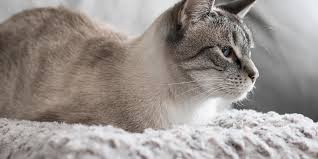 the best cat beds according to our cats