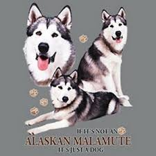 Details About Not Alaskan Malamute Just Dog Size Youth Small 6 X Large T Shirt Pick Size