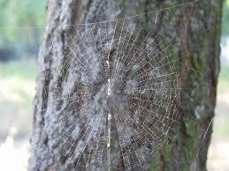 Как выбрать реферат в сети интернет Статьи Дерево и паучья сеть