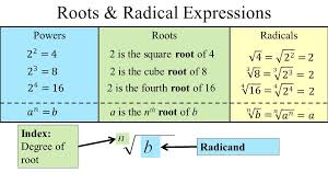 3 roots