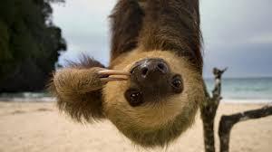 <b>Sloth</b>