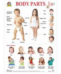 Body Part Chart For Toddlers Big Sized Wall Hanging Educational Body Parts Chart Multicolour