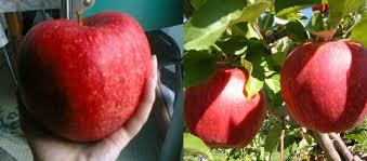 omg-facts-most-expensive-fruits-in-world-Duniya Ke Sabse Mehange Fhal