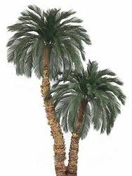There are many artificial decorative trees, like artificial palm trees,  specially made for meeting and board rooms. Such large artificial trees go  a long ...