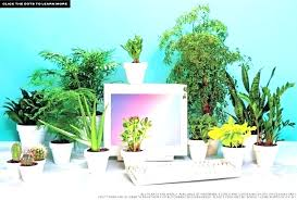 Great office plants Sunlight Small Desk Plants Best For The Office Pertaining To Good Indoor Cubicle Stupendous Plant Table Desks Indoor Desk Plants Office Greenmoxie Office Plants Low Light House Best Indoor Great Desk Gallery Of