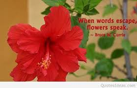 Flowers Quotes Cool Spring Flowers Wallpapers With Quotes Pictures