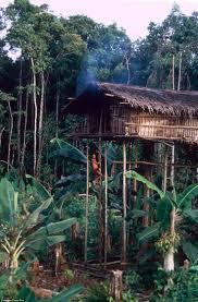 Best 25 Amazon rainforest tribes ideas on Pinterest