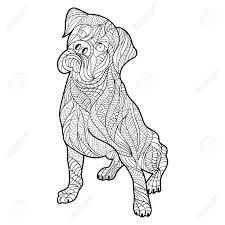 Elegante Kleurplaat Boxer Hond Krijg Duizenden Kleurenfotos Van