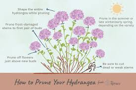 How To Prune Different Kinds Of Hydrangeas