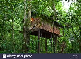 Lion Sands Game Reserve  Luxury Treehouses Night Under The StarsTreehouse Accommodation