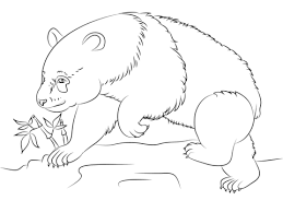 Small Picture Panda Bear coloring page Free Printable Coloring Pages