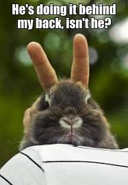 cute animals quotes.  Cute Funniest Pictures The Morning Funnys Inside Cute Animals Quotes T