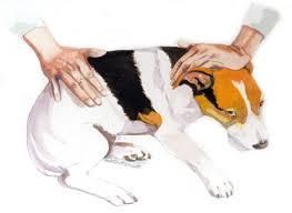 How To Massage Your Dog Modern Dog Magazine