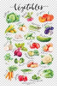 Variety Of Vegetables Chart Vegetable Auglis Gourd Food