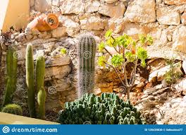Cactus Succulent Landscape Design Different Types Of Cacti Succulents And Earthenware Jug In
