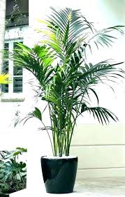 buy simulation leather fake palm trees tropical landscape tree mall decoration indoor plants in cheap price . Artificial Palm Trees Decorative Indoor Types Of Plants Different