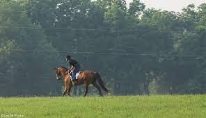 ask the vet roaring in horses horse