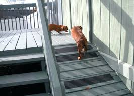 s dog ramp for outdoor stairs high deck