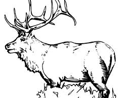 Small Picture Elk Coloring Pages for Kids Download Print Online Coloring