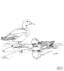 Small Picture Coloring Pages Ducks Coloring Pages Free Coloring Pages Duck