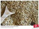 Как почистить подсолнух от семечек в домашних условиях