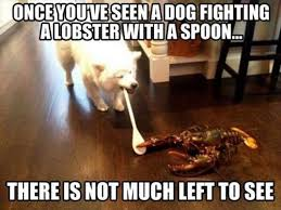 Funny Dog Quotes Extraordinary Funny Dog Quotes Part Four WeNeedFun