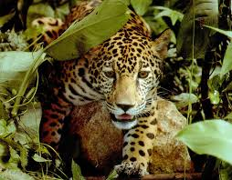 Risultati immagini per la selva de las aguas grandes