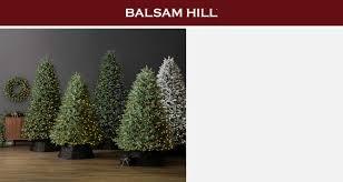 Balsam Hill   Nordstrom