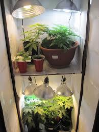 best indoors greendreams indoor closet grow room setup design surprising closet grow room