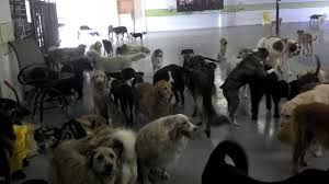 lots of dogs together. Simple Lots Lots Of Dogs And Of Dogs Together P