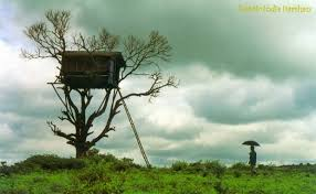 Exotic Tree Houses Exotic India Darshan Kerala A Beautiful Holiday Destination For