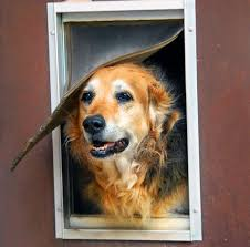 dog door installation cost doggy door