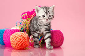 Sewing Thread A Little Known Menace To Cats Catster