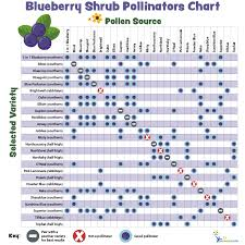 Blueberry Ripening Chart Pollination Charts For Fruit Bearing Trees And Shrubs My