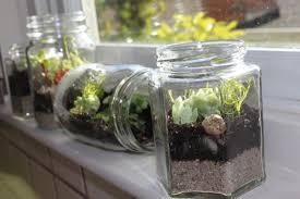 Ideas Glass Terrarium Containers