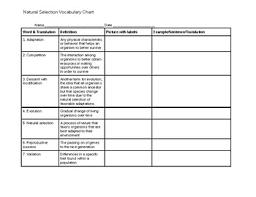 Natural Selection Vocabulary Chart