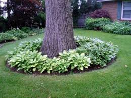 Stunning Landscaping Around A Tree Ideas