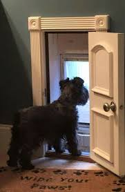 decorative dog doors. Build Mav A Doggie Door That Dead Bolts So He Can Run Outside. Have Be Decorative Dog Doors