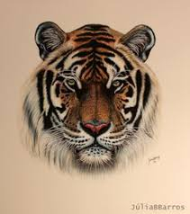color tiger drawing. Interesting Tiger Tiger Drawing By Julia Barros In Color E